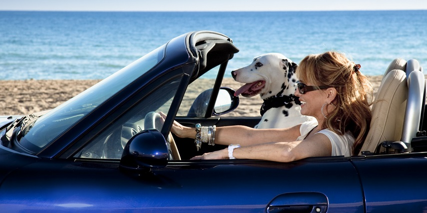 Car with pet-friendly seat covers designed through 3D car customization online