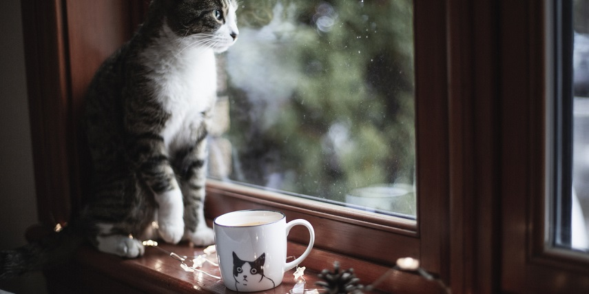 Cat sitting next to a customized mug with a cat picture that was created through a Magento product configurator